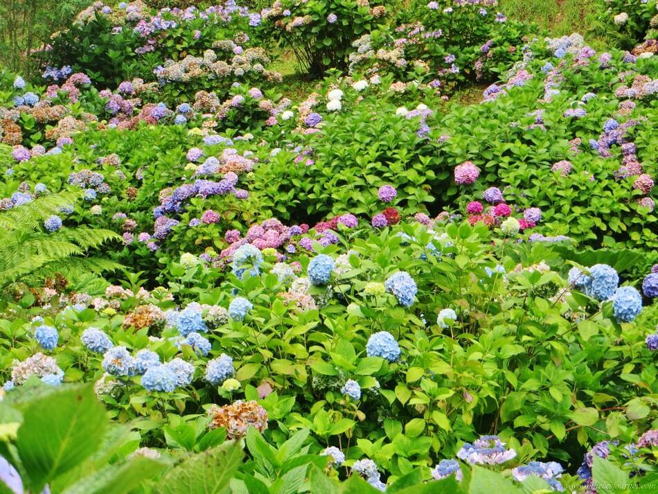 plus-beaux-jardins-angleterre