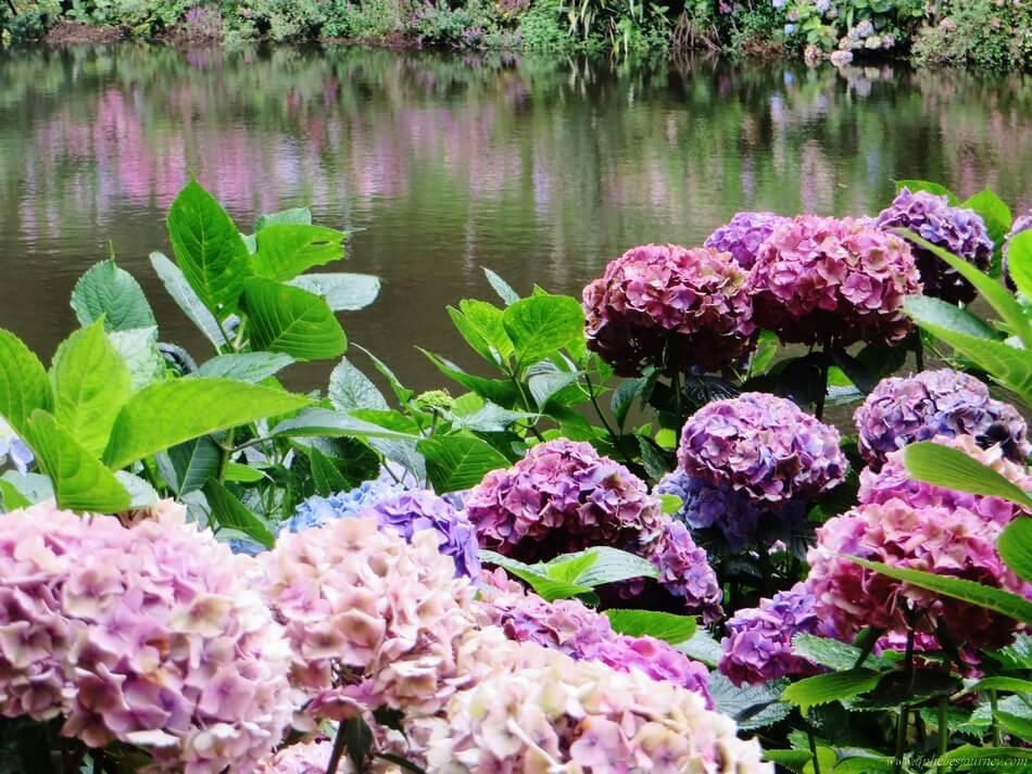 cornouailles-jardin